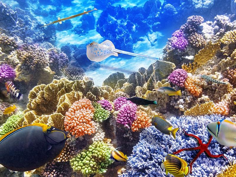 Пазл Собирать пазлы онлайн - Подводное царство