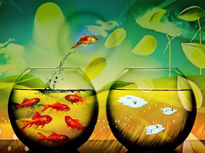 Пазл Собирать пазлы онлайн - Полет рыбы