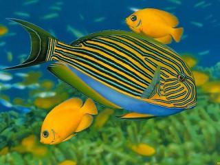 Собирать пазл Полосатая рыба онлайн