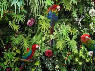 Собирать пазл Попугаи среди цветов онлайн