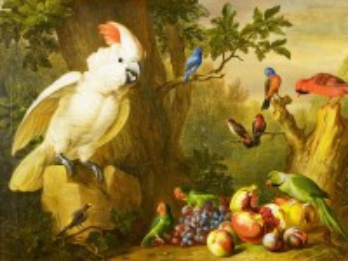 Собирать пазл Попугайки онлайн