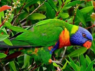 Собирать пазл Попугай онлайн