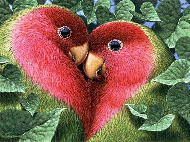 Птичка любви картинки