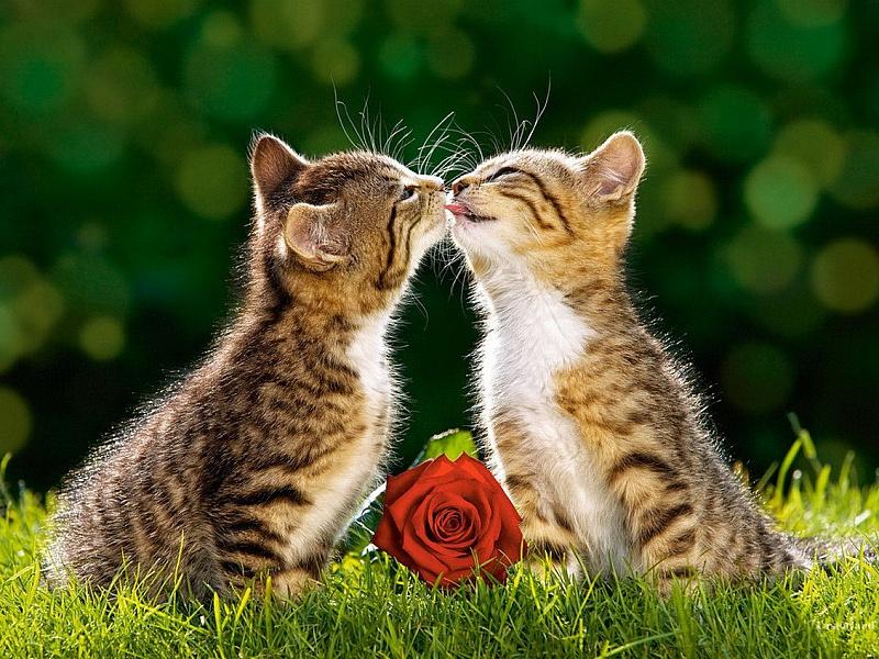 Пазл Собирать пазлы онлайн - Поцелуй