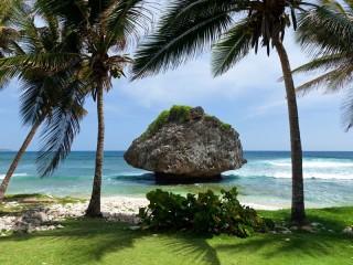 Собирать пазл Природа тропики онлайн