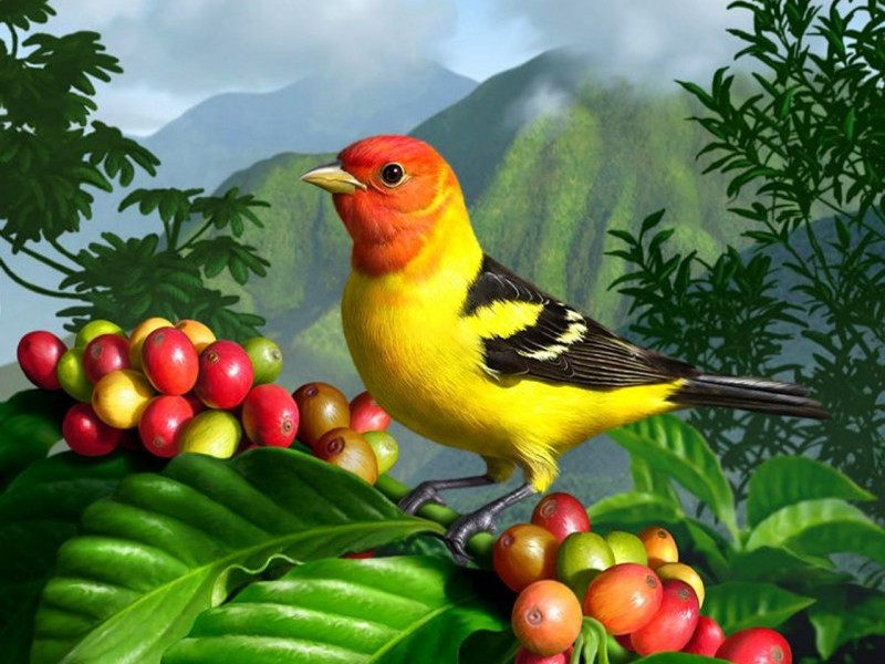 Пазл Собирать пазлы онлайн - Птичка и ягоды