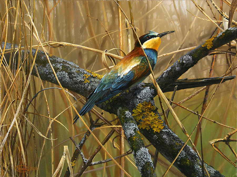 Пазл Собирать пазлы онлайн - Птичка на ветке