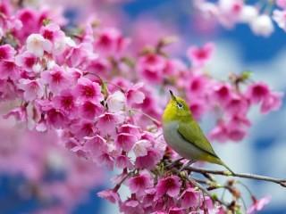 Собирать пазл Птичка на ветке онлайн
