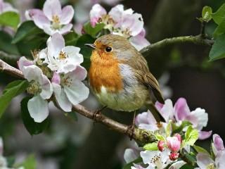 Собирать пазл Птичка на яблоне онлайн