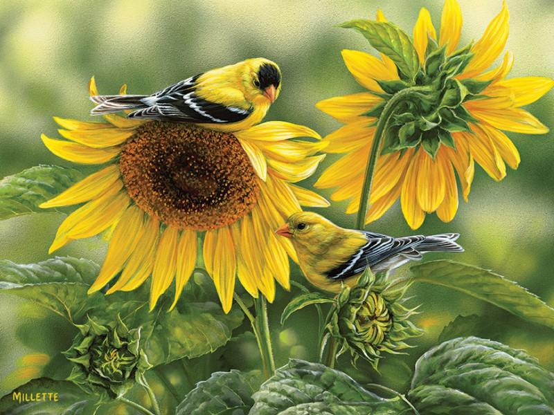 Пазл Собирать пазлы онлайн - Птички и подсолнухи