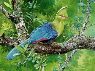 Собирать пазл Птица на дереве онлайн