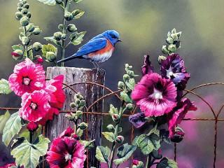 Собирать пазл Птица онлайн