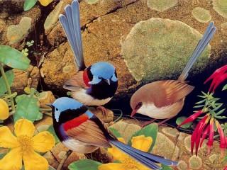 Собирать пазл Птицы на камнях онлайн