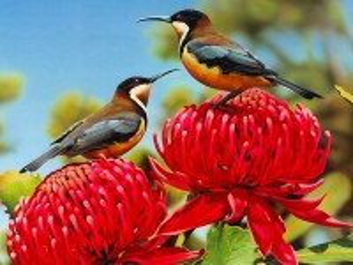Собирать пазл Птицы на цветах онлайн