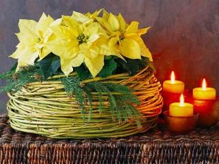 Собирать пазл Пуансеттия и свечи онлайн