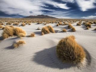 Собирать пазл Пустынная растительность онлайн