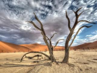 Собирать пазл Пустыня Намиб онлайн