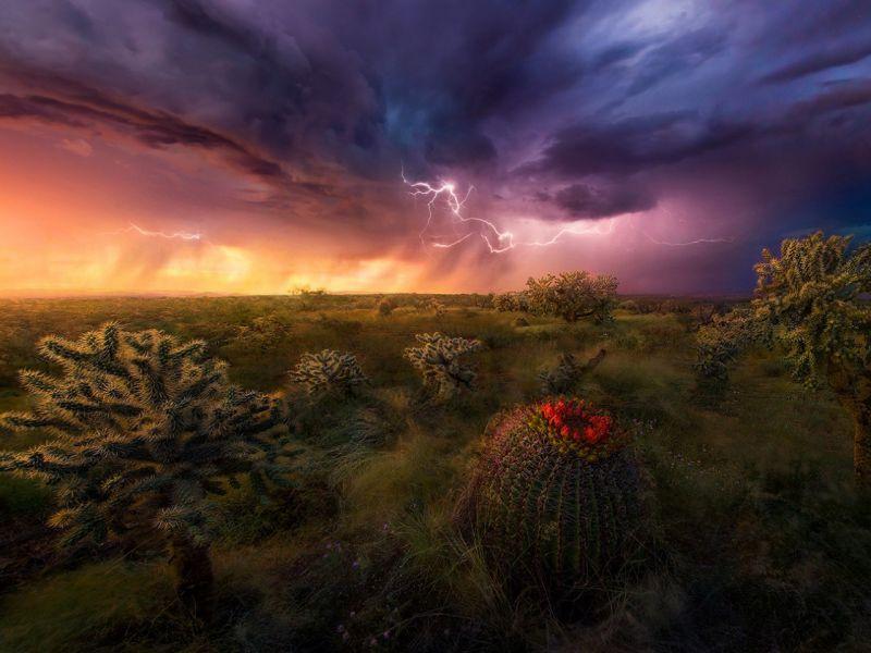 Пазл Собирать пазлы онлайн - Пустыня Сонора