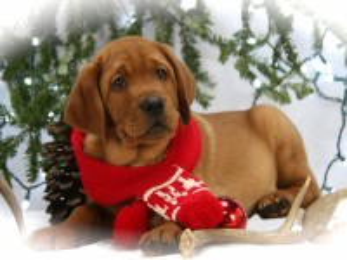 Собирать пазл Пёс в шарфе онлайн