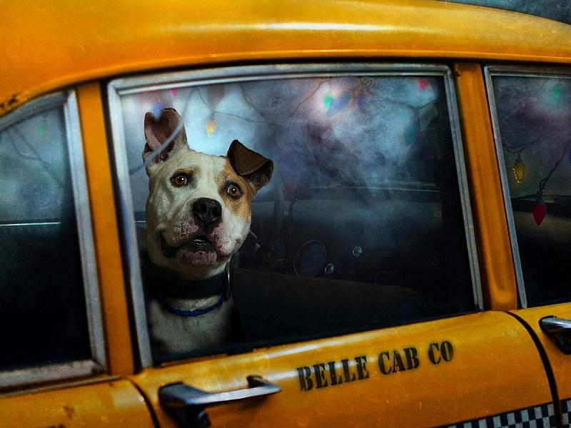 Пазл Собирать пазлы онлайн - Пёс в такси