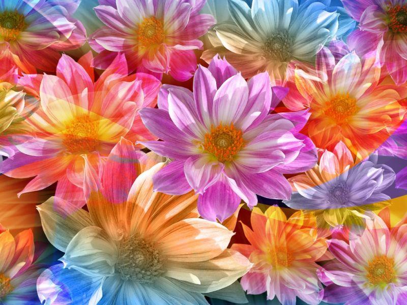 Пазл Собирать пазлы онлайн - Радужные цветы