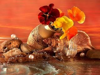 Собирать пазл Раковины в цветах онлайн