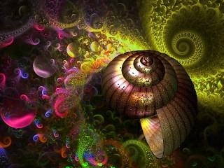 Собирать пазл Ракушка и спираль онлайн