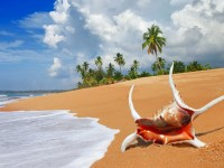 Собирать пазл Ракушка на пляже онлайн