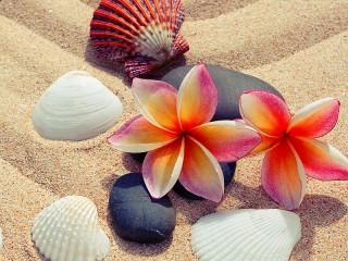 Собирать пазл Ракушки на песке онлайн