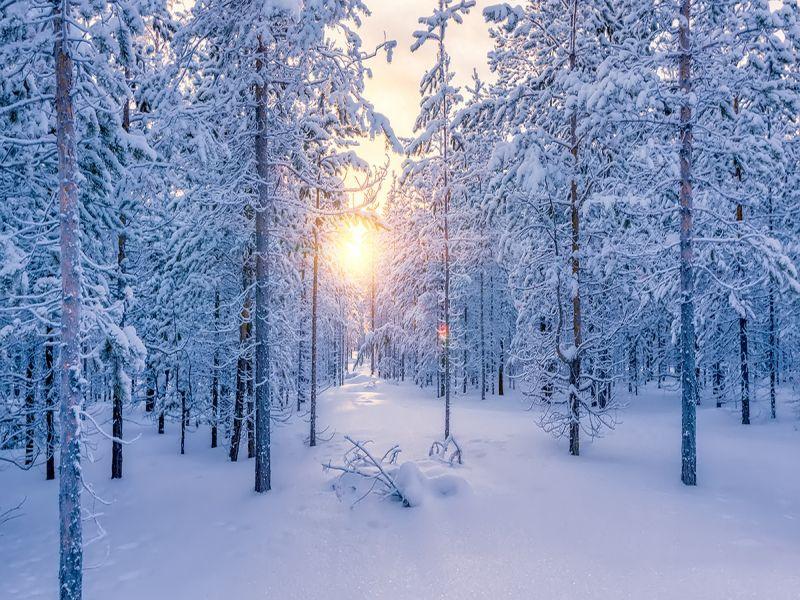 Пазл Собирать пазлы онлайн - Рассвет в лесу