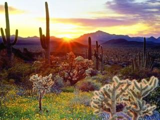 Собирать пазл Рассвет в пустыне онлайн