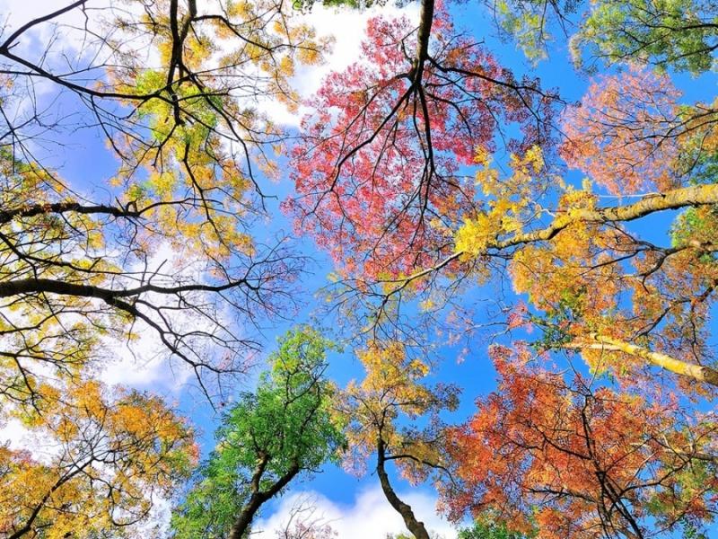 Пазл Собирать пазлы онлайн - Разноцветные деревья