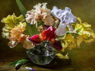Собирать пазл Разноцветные ирисы онлайн