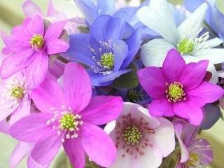 Собирать пазл Разноцветные цветы онлайн