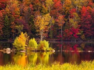 Собирать пазл Река в лесу - осень онлайн