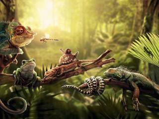 Собирать пазл Рептилии онлайн