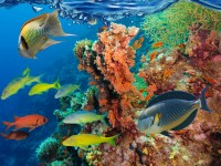 Собирать пазл Рыбы и кораллы онлайн