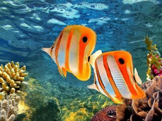 Собирать пазл Рыбы в океане онлайн