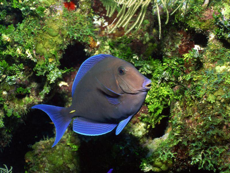 Пазл Собирать пазлы онлайн - Рыбка