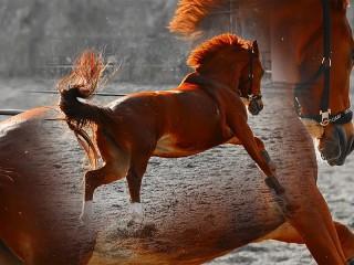 Собирать пазл Рыжая лошадь онлайн