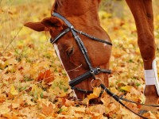Собирать пазл Рыжий конь онлайн