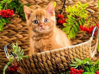 Собирать пазл Рыжий котёнок онлайн