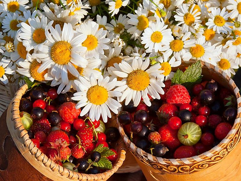 Пазл Собирать пазлы онлайн - Ромашки и ягоды
