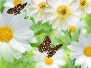 Собирать пазл Ромашки с бабочками онлайн