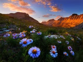 Собирать пазл Ромашки в горах онлайн