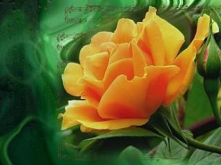 Собирать пазл Роза и ноты онлайн