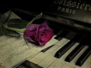 Собирать пазл Роза на клавишах онлайн