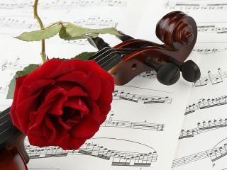 Собирать пазл Роза на скрипке онлайн