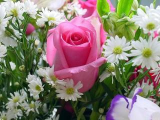 Собирать пазл Роза среди ромашек онлайн