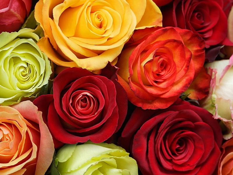 Пазл Собирать пазлы онлайн - Розы